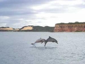 Baia dos Golfinhos Pipa